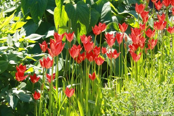 jardin botanique birmingham-11